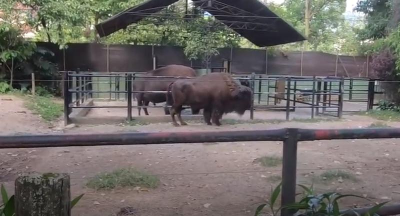 Antioquia, Colombia, Zoológico Santa Fe